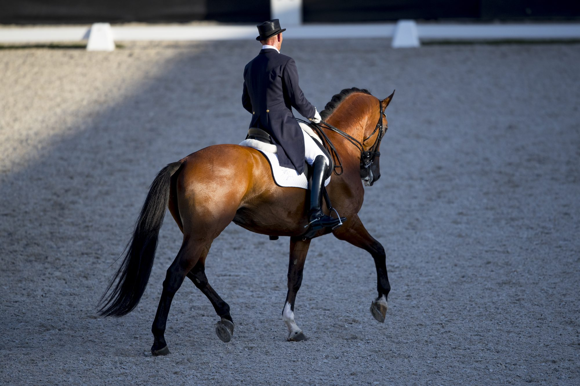 Dutch Dressage Inc.